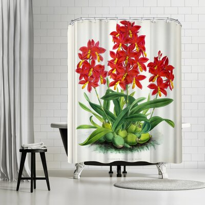New York Botanical Garden Fitch Orchid Epidendrum Vitellinummajus Shower Curtain