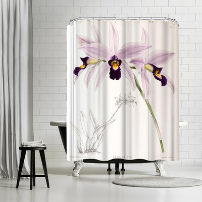 New York Botanical Garden Fitch Orchid Laelia Anceps Shower Curtain