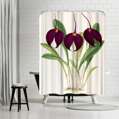 New York Botanical Garden Fitch Orchid Masdevallia Harryana Atrosanguinea Shower Curtain