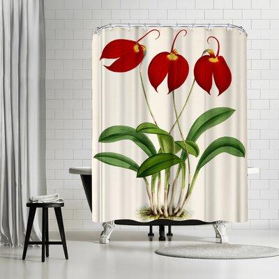 New York Botanical Garden Fitch Orchid Masdevalliaignea Shower Curtain