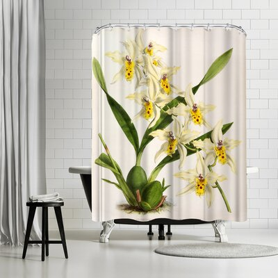 New York Botanical Garden Fitch Orchid Odontoglossum Alexandrae Flaveolum Shower Curtain