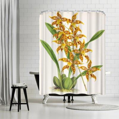 New York Botanical Garden Fitch Orchid Odontoglossum Leeanum Shower Curtain