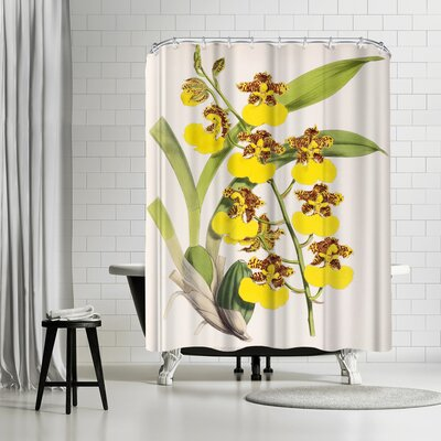 New York Botanical Garden Fitch Orchid Odontoglossum Londesboroughianum Shower Curtain