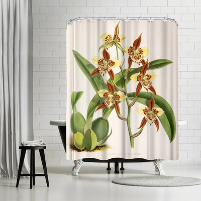 New York Botanical Garden Fitch Orchid Odontoglossum Maculatum Shower Curtain