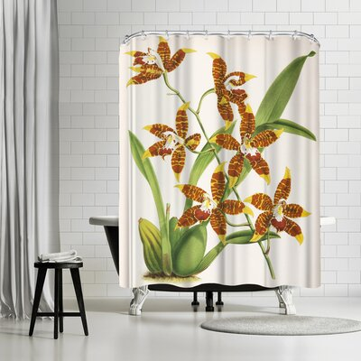 New York Botanical Garden Fitch Orchid Odontoglossum Triumphans Shower Curtain