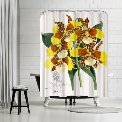 New York Botanical Garden Fitch Orchid Odontoglossum Williamsianum Shower Curtain