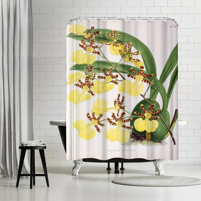 New York Botanical Garden Fitch Orchid Oncidium Tigrinum Shower Curtain
