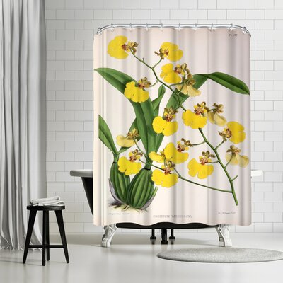 New York Botanical Garden Fitch Orchid Oncidium Varicosum Shower Curtain