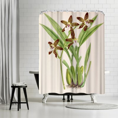 New York Botanical Garden Fitch Orchid Zygopetalum Burkei Shower Curtain