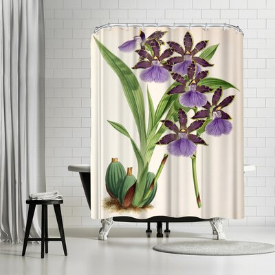 New York Botanical Garden Fitch Orchid Zygopetalum Clayii Shower Curtain