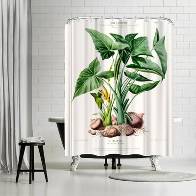 New York Botanical Garden Flored Amerique Lemalanga Shower Curtain