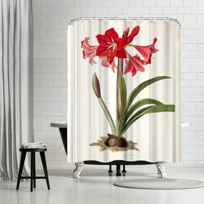 New York Botanical Garden Amaryllis Johnsoni Shower Curtain