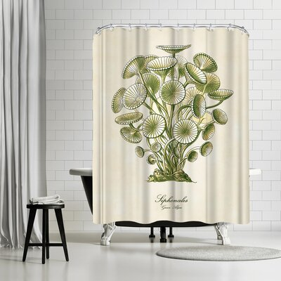 Adams Ale Algae Shower Curtain