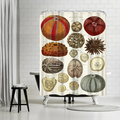 Adams Ale Sea Urchins Shower Curtain
