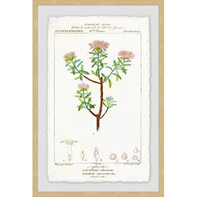 'Pink Tops' Framed Print B3F577CD9E06429D88C1470353EF8B31