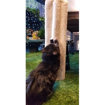 Couch Shield Scratching Post Color: Ivory