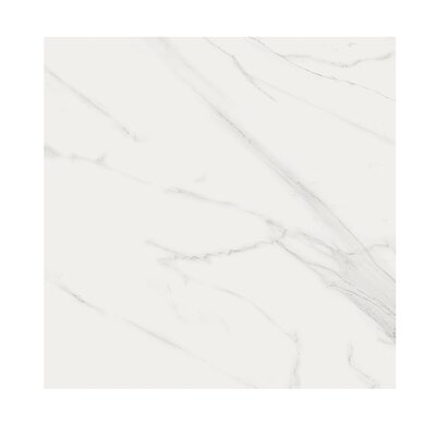 Marmi Matte 24 x 24 Porcelain Field Tile in Carrara