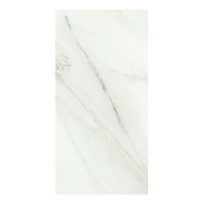 Calacata Classico 24 x 48 Porcelain Field Tile in Bone White