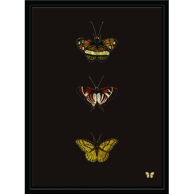 'Butterfly Portrait II' Framed Graphic Art Print on Canvas 25E5277418B94D638315994A65A35D1E