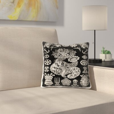 Haeckel Plate 50 Throw Pillow Size: 16 x 16