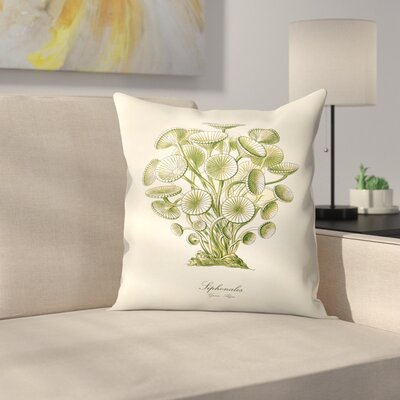 Algae Throw Pillow Size: 18 x 18