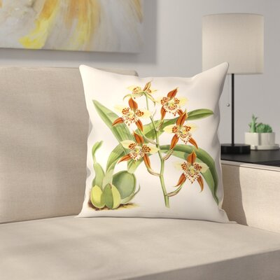 Fitch Orchid Odontoglossum Maculatum Throw Pillow Size: 18 x 18