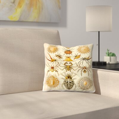 Haeckel Plate 66 Throw Pillow Size: 18 x 18