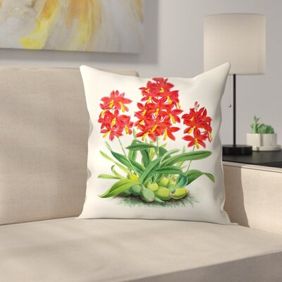 Fitch Orchid Epidendrum Vitellinummajus Throw Pillow Size: 16 x 16