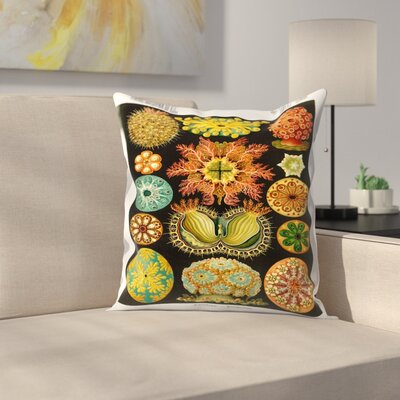 Haeckel Plate 84 Throw Pillow Size: 14 x 14
