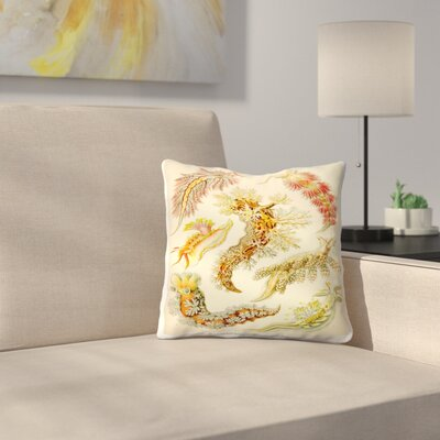 Haeckel Plate 43 Throw Pillow Size: 14 x 14