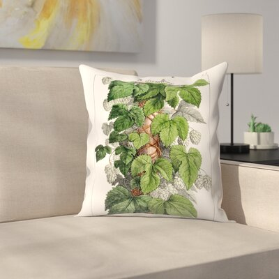 Schlingpflanze Throw Pillow Size: 16 x 16