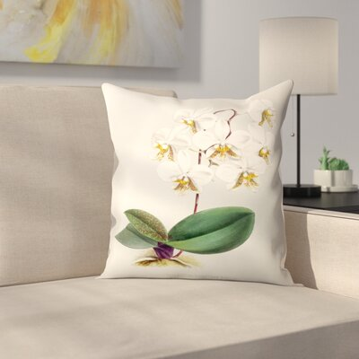 Fitch Orchid Phalaenopsis Stuartiana Nobilis Throw Pillow Size: 18 x 18