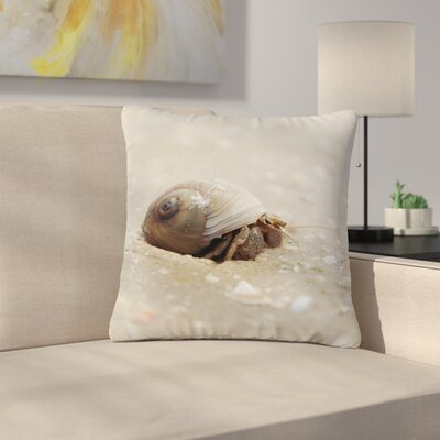 Angie Turner Hermit Crab Photography Outdoor Throw Pillow Size: 16 H x 16 W x 5 D