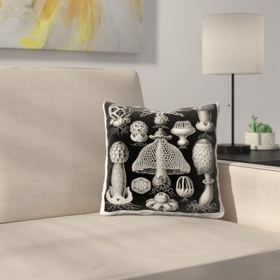 Haeckel Plate 63 Throw Pillow Size: 14 x 14