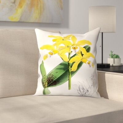 Fitch Orchid Laelia Xanthina Throw Pillow Size: 18 x 18