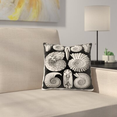 Haeckel Plate 44 Throw Pillow Size: 16 x 16