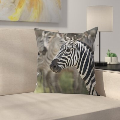 Zebra in Serengati Park Cushion Pillow Cover Size: 24 x 24
