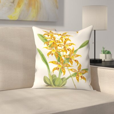 Fitch Orchid Odontoglossum Leeanum Throw Pillow Size: 14 x 14