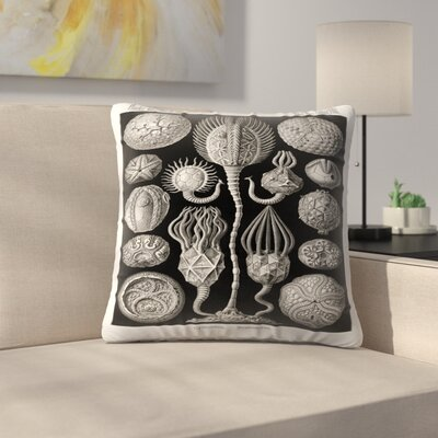 Haeckel Plate 90 Throw Pillow Size: 14 x 14