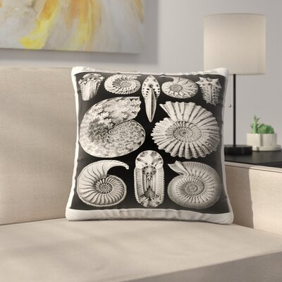 Haeckel Plate 44 Throw Pillow Size: 14 x 14