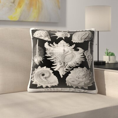 Haeckel Plate 53 Throw Pillow Size: 16 x 16