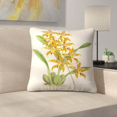 Fitch Orchid Odontoglossum Leeanum Throw Pillow Size: 18 x 18