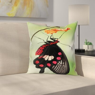 Swallowtail Coming Out Cocoon Square Cushion Pillow Cover Size: 24 x 24
