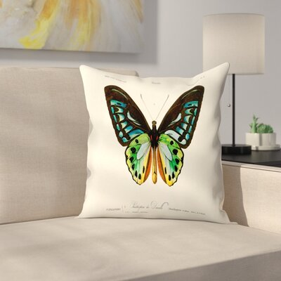 Insectes Throw Pillow Size: 14 x 14