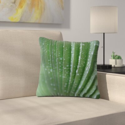 Cyndi Steen Palm Frond Nature Outdoor Throw Pillow Size: 16 H x 16 W x 5 D