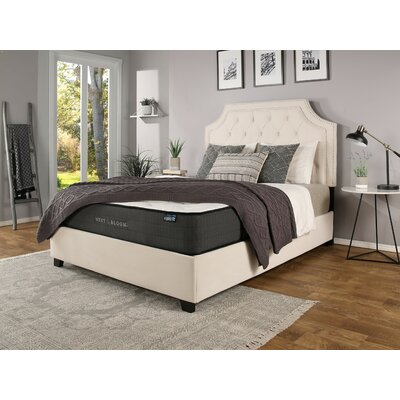 Devitt Upholstered Panel Bed with Mattress Size: California King