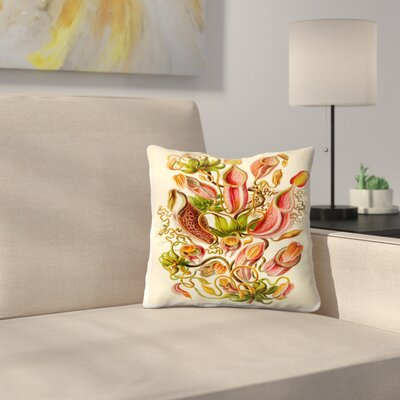 Haeckel Plate 62 Throw Pillow Size: 18 x 18