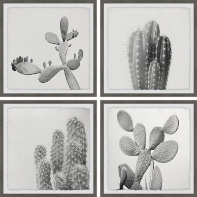 'Cacti Types Quadriptych' 4 Piece Framed Graphic Art Print Set on Paper