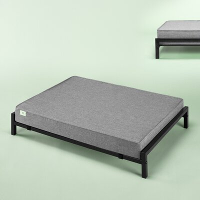 Elevated Cot Size: 5.98 H x 25 W x 30 D