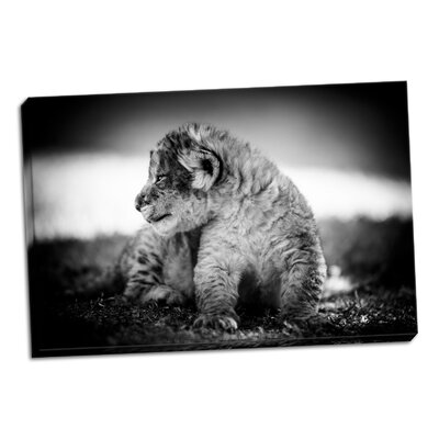 'Lion Cub' Photographic Print on Wrapped Canvas D2016ED942FC464DADF80090E231269A